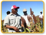 Windfall for Botswana Farmers